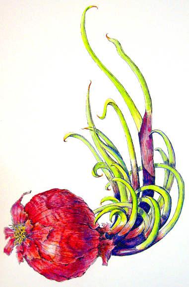 onion_draw